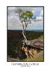 Glenbrook Gorge Australia (sugarbellaleah) Tags: glenbrook gorge creek trees mountain bluemountains trek hike bushwalk leisure recreation nationalpark pretty amazing fun outdoors nature australia westernsydney geology cliffs steep