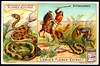 Liebig Tradecard S748 - Mocassin and Rattle Snakes (cigcardpix) Tags: tradecards advertising ephemera vintage chromo liebig snakes