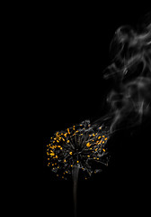 Soon it Will be Dark (Lightcrafter Artistry) Tags: burn smolder glowing embers fire smoke dandelion macro abstract conceptual minimalism