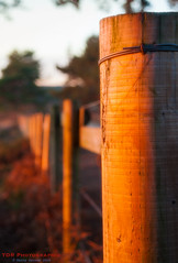 Fence at Sunset (TDR Photographic) Tags: canon dorset england thedorsetrambler uk dreamy eos5d evening fence landscape light possibles softfocus softar sunset tree