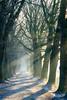 Winter-Allee (webpinsel) Tags: allee bäume halternamsee prozessionsweg sonnenstrahlen winter