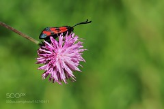 Red (sergeyashin) Tags: ifttt 500px flowers red beauty spring color flower light turkey summer beautiful natural colors photo green photograph photography photoshop colorful photographer türkiye antalya kumluca finike necdet yasar ph otos otograph ne cdet