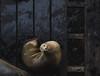 Do You Mind (sweet.disposition) Tags: sealion grumpy ocean sea winter dock wharf santacruzca california