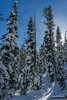 Snowshoe Forest (kevin-palmer) Tags: grandtetonnationalpark nationalpark wyoming winter december cold snow snowy nikond750 tetonmountains tamron2470mmf28 blue sky sunny sunshine clouds trail forest path