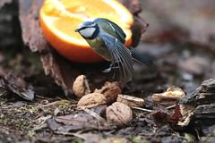 Natural set (carlo612001) Tags: naturalset set shooting friend orange bird birds animal nature wildlife wings cute colors