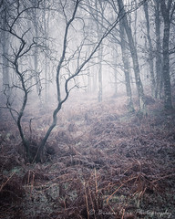 Woodland Relationship (.Brian Kerr Photography.) Tags: edenvalley cumbria landscapephotography winter weather mistymorning cold frozen frosty birchtree relationship trees photography nature naturallandscape landscape plumpton lazonby armathwaite penrith forest woodland briankerrphotography briankerrphoto serene outdoor outdoorphotography quiet peaceful peace hills mist tree misty