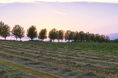 Sunset field (DAVIDHAUGE) Tags: trees sunset summer sky green field minnesota dave landscape outdoors nikon farm row line d750 hay grassland plain delano hauge