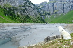 And where is the promised lake? (balu51) Tags: cliff dog white lake mountains alps green nature water rock landscape grey waterfall spring sand wasser afternoon hiking leer grau berge mai hund 24mm raining regen kuvasz felsen wanderung stausee 2015 nachmittag wasserflle felswand almostempty hirtenhund copyrightbybalu51 panixersee