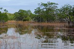 Everglades N.P. - Florida (Virri) Tags: usa nature florida canoe adventure everglades canoeing canoa avventura wildnature evergladesnp usaontheroad