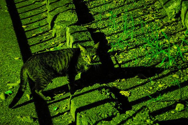 Today's Cat@2015-07-31