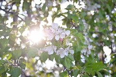 097 (abbisnews) Tags: pink sun sunlight blur green nature field nikon focus natural indiana depth d3200