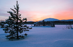 Lapland (Mathieu Pierre) Tags: lappland laponie finnland lapland snow north night sky light silence nature landscape northern polar circle extérieur paysage winter canon 7d mark 2 1635mm f28 eos ii f28l usm