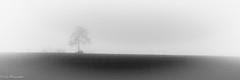 20161231Brouillard-12 (loflol) Tags: coteaux brouillard brume ancien grain