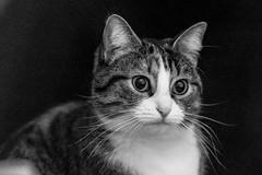 Pallina 1409 (Federico Basile FB Photo Images) Tags: gatto gatta gattina gattino gattini animale felino pallina cucciolo cucciola azione verde neve salto coccole fusa giochi cat smallcat cats cute sweet sweetcat