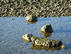 Light, shade, shadow, reflection, refraction.... pebbles on Chesil Beach... (Sue - happy sparrow) Tags: light shade reflection refraction shadow sunlight stone portlandstone portland chesil beach chesilbeach dorset winter