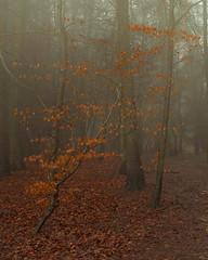 Last remains of Autumn (littlenorty) Tags: colour england fujixt1 hill landscape mist mood oxfordshire tree type watlington weather weatherandseasons atmophere autumn fuji1024
