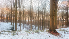Winter landscape. (rudi.verschoren) Tags: winter landscape landschap light lines outdoor leaves sunset cold colors red yellow blue brown black white trees flanders belgium europe eos europa exposure canon 70d forest