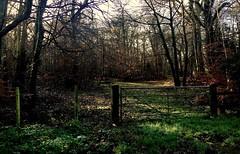 Winter Fence (NJKent) Tags: treemendoustuesday saveearth fencefriday gate fence winter sunshine wood norfolk uk