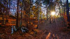 O Sole Mio 😊 (TanzPanorama) Tags: forest woods trees sunlight sole sunstar sun landscape nature tanzpanorama sonya7ii ilce7m2 sony fe1635mmf4zaoss sel1635z leaves leaf england surrey osolemio foliage