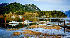 Pitt Lake Marina (spetersonphotography ★★Happy New Year!★★) Tags: boating boats dock moorage pittlake grantnarrowsregionalpark mapleridge britishcolumbia canada nikon nikond5200 shoreline nature trails marsh wildlife birds lake fishing photopainting liquidpainting digitalart