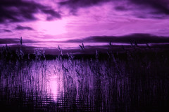 purple day (Morag.) Tags: grass reflection purple sky cloud sun water lake loch scotland lakeofmenteith portofmenteith nikon d3300 nikkor digital winter january landscape landschaft cielo bright