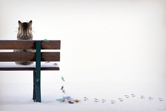 What Bird? (clabudak) Tags: bird feathers cat sitting bench winter snow tracks netartii