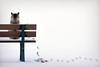 What Bird? (clabudak) Tags: bird feathers cat sitting bench winter snow tracks netartii
