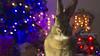 Un año más (Vicky.Daisuki.Velásquez) Tags: bunny conejo coneja usagi christmas navidad luces bokeh colors color love pet friends guatemala vickyvelásquez sony