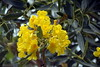 Bali, Indonesia. (Manoo Mistry) Tags: bali indonesia nikond5500body nikon tamron18270mmzoom outdoor yellow plants nature