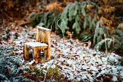 Wooden Chair #1 (andimitt) Tags: wood carve snow tree chair nature