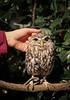 20161231-IMG_5066 (stringer8247) Tags: owl forest harajuku tokyo japan