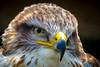 I see you (pel16931) Tags: yourbestoftoday animal bird janceeslont netherlands nederland holland westfriesland westfries dutch nikond7000 vogel 2015 may