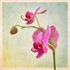 Orchid delight (Nancy Rose) Tags: 8667 orchid texture flower artsy