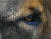 Tiny Tiles (swong95765) Tags: dog eye mosaic art tile tiles canine animal head texture