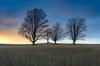 Autumn Knights (Aaron Springer) Tags: michigan northernmichigan tree maple silhouette twilight field pasture farm fall autumn october serene outdoor nature landscape