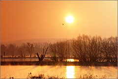 2017 01 22 9°° -9° Hattenheim - 15b (Mister-Mastro) Tags: hattenheim kalt rhein sonnenaufgang rhine germany sunrise cold bird trees vogel bäume orange wasser water flus river