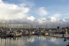 Still Dancin' Between the Rains (msuner48) Tags: d750 cs4 acr5 water marina boats clouds sky bird gull emeryvilleca nikcollection nikonafs24120mmf4ged