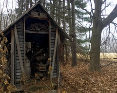 #Shack #Shed #old #busted #broken #wood #tilted #flimsy #wood #woods #leaves #forest #woodland #Mikey #mike #Liebler #Connecticut #CT (mikeliebler222) Tags: shack shed old busted broken wood tilted flimsy woods leaves forest woodland mikey mike liebler connecticut ct