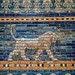 A lion on the Ishtar Gate of Babylon reconstructed with original bricks at the Pergamon Museum in Berlin 575 BCE (2)