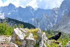 DSC_7373 (Original Loisi) Tags: panorama mountain mountains nature berg view wildlife natur berge slovenia slovenija slowenien wandern kranjskagora bergwelt republikaslovenija kronau