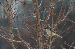 Untitled (Day 3) (J Murray Images) Tags: nature birds 3365 cy365