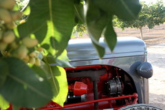 IMG_0380 (ACATCT) Tags: old españa tractor spain traktor agosto toledo antiguo massey pistacho tembleque barreiros 2015 bustards perdices liebres avutardas ff30ds r350s