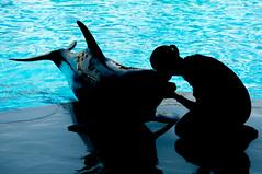 Love (Madmilox) Tags: family fish love nikon kiss tour famiglia dolphin silhouettes entertainment pesci gita amore farmanimals bacio siluette overseas riccione spettacolo delfino divertimento delfini d90 rettili rapaci oltremare fattoriaanimali