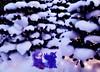 Have Yourself a Purple Little Christmas (pianocats16, miau...) Tags: suki blythe custom doll jenink purple hair princess luna pony toy sledge winter christmas tree fantasy snow