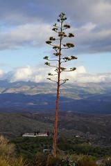 Sierra Nevada (Márcia_Marton) Tags: sierranevada espanha españa spain válor mecinaalfahar alpujarras