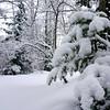 DSC02217_3 (aleksey1971) Tags: siberia altai belokurikha winter nature forest landscape tree snow сибирь алтай белокуриха зима природа пейзаж лес снег
