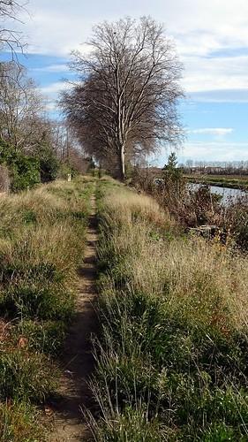 Le petit chemin au bord du canal
