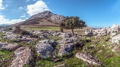 Paseando por el Torcal de Antequera (abel.maestro) Tags: sky forest beauty color travel blue europe rock tree dog beautiful green spain walking mountain andalusia europa arbol roca málaga antequera encina montaña torcal