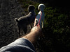 'Whither thou goest ... ' (Canadapt) Tags: dogs standardpoodles tess nina arm selfie leash walk shadow keefer canadapt