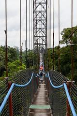 Jungle canopy bridge (Ken Pick) Tags: jungle trees ecuador travel bridges 117picturesin2017 hiking naporiver southamerica amazonbasin sachalodge bridgethegap